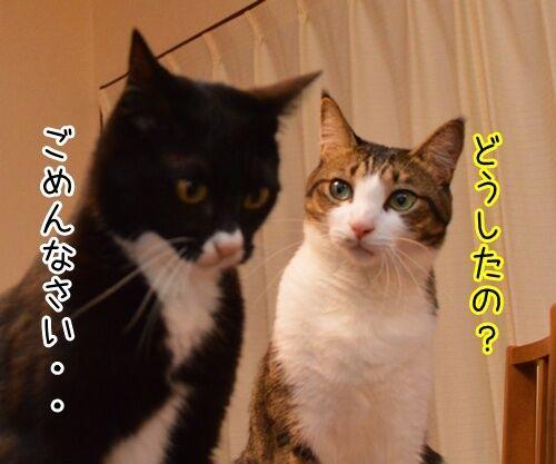 アタチ、じつは… 猫の写真で4コマ漫画 2コマ目ッ