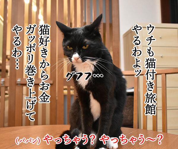 猫カフェの猫さんと泊まれる旅館があるんですってッ 猫の写真で4コマ漫画 3コマ目ッ