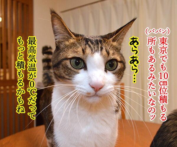 東京も大雪なんですってッ 猫の写真で4コマ漫画 2コマ目ッ