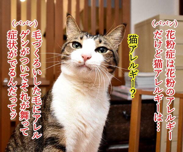 アレルギーっていろいろあるわよねッ 猫の写真で4コマ漫画 3コマ目ッ