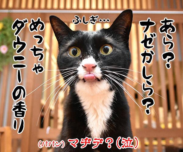 お耳の中がかゆいのよッ 猫の写真で4コマ漫画 4コマ目ッ