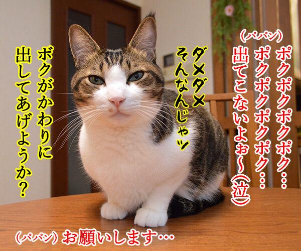 とんちんかんちん一休さん 猫の写真で4コマ漫画 3コマ目ッ