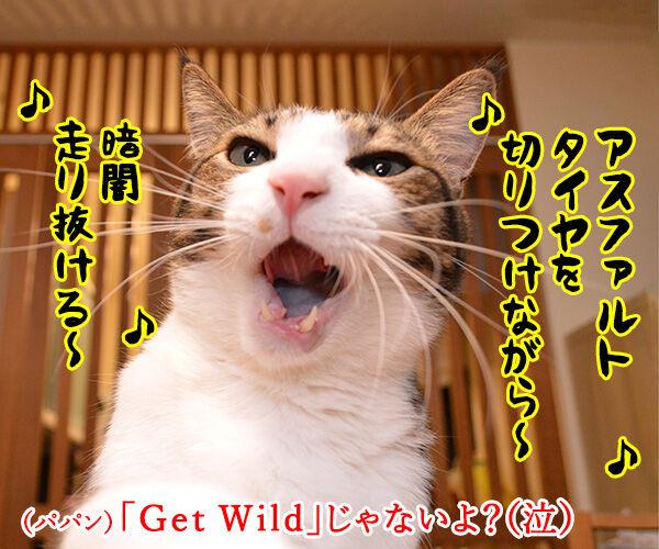 「GW」って何の略かしらッ? 猫の写真で4コマ漫画 2コマ目ッ