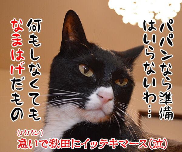 大晦日のできごと 猫の写真で4コマ漫画 4コマ目ッ