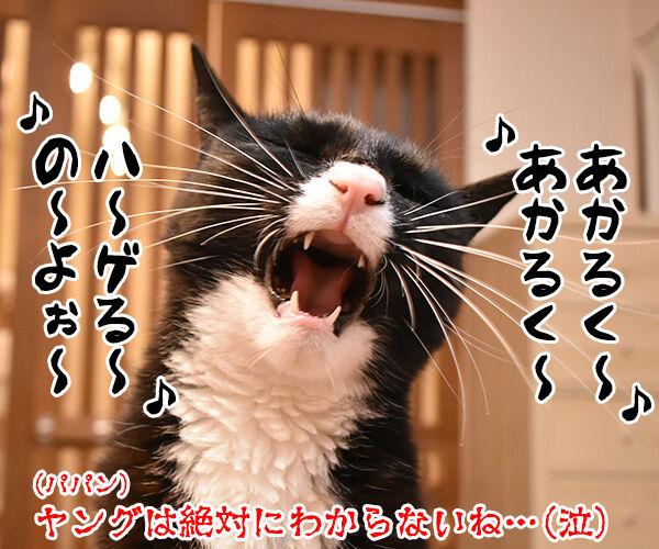 パパンは東京のハゲ… 猫の写真で4コマ漫画 4コマ目ッ