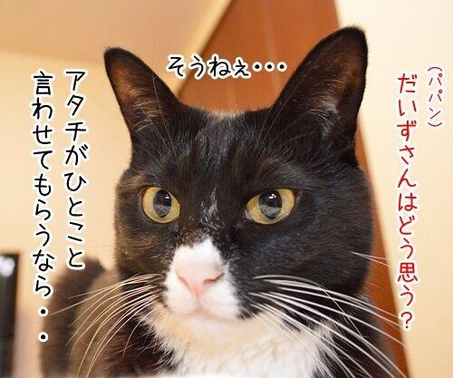 スマスマ緊急生放送を見て…… 猫の写真で4コマ漫画 3コマ目ッ