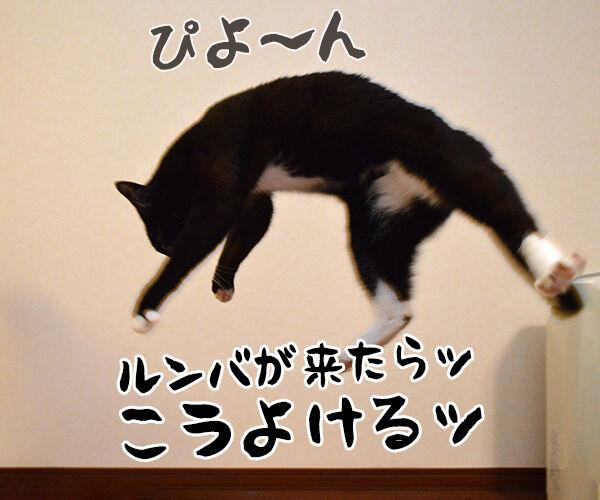 アタチ 特訓したのッ 猫の写真で4コマ漫画 3コマ目ッ