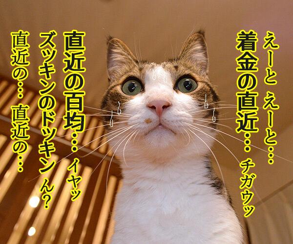 経理課あずきは大忙しッ 猫の写真で4コマ漫画 3コマ目ッ