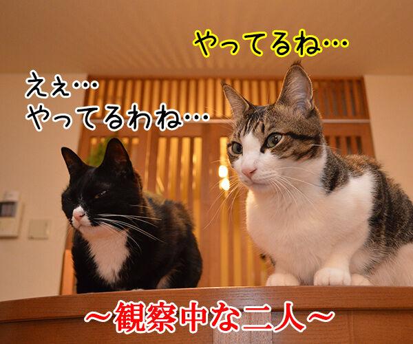やってるね 猫の写真で4コマ漫画 1コマ目ッ