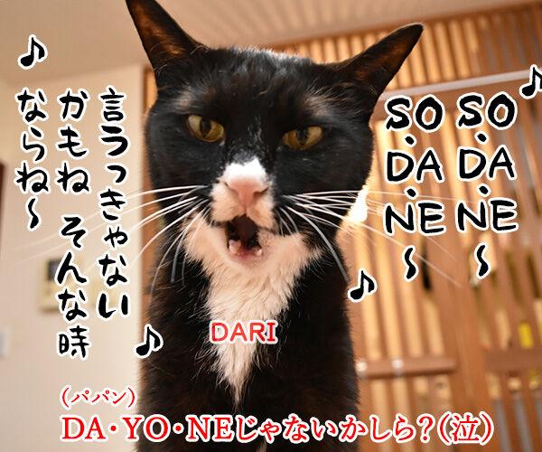 流行語大賞は「そだねー」に決まったのよッ 猫の写真で4コマ漫画 3コマ目ッ