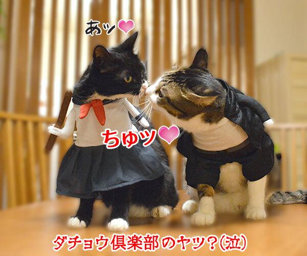 ヤンキーあずきとスケバンだいず 猫の写真で4コマ漫画 4コマ目ッ