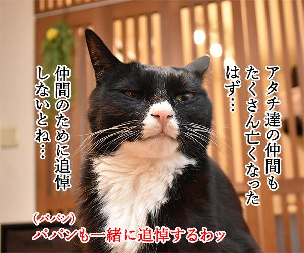 3月11日14時46分は みんなで黙祷を捧げるわよ 猫の写真で4コマ漫画 2コマ目ッ