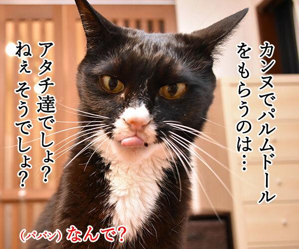 映画『万引き家族』はカンヌでパルムドールなのッ 猫の写真で4コマ漫画 3コマ目ッ