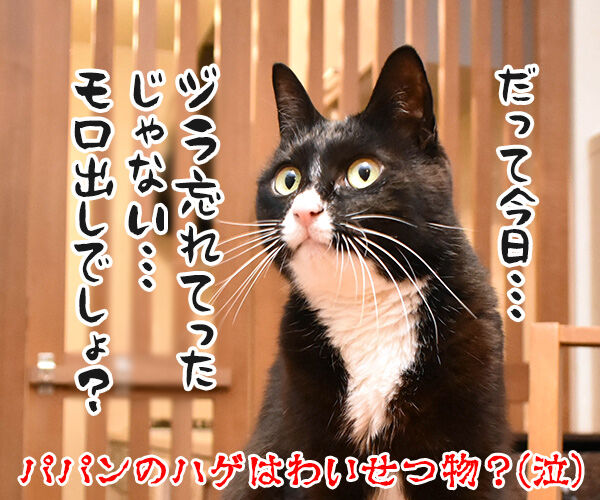 パパンの帰りが遅いから… 猫の写真で4コマ漫画 4コマ目ッ