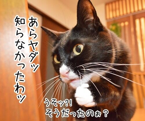 ちょっと奥さん、聞いたぁ? 猫の写真で4コマ漫画 2コマ目ッ