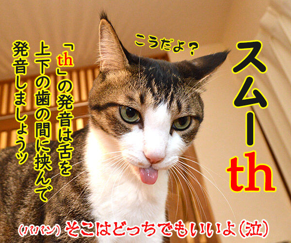 寝起きをスムーズにする方法って? 猫の写真で4コマ漫画 4コマ目ッ