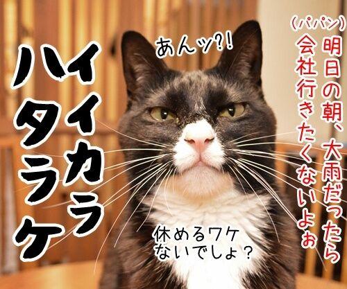 台風が来てるけど 猫の写真で4コマ漫画 2コマ目ッ