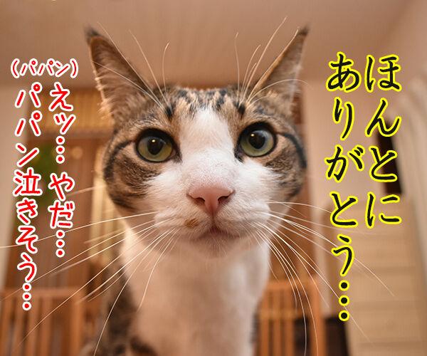 きょうは父の日だものッ 猫の写真で4コマ漫画 3コマ目ッ