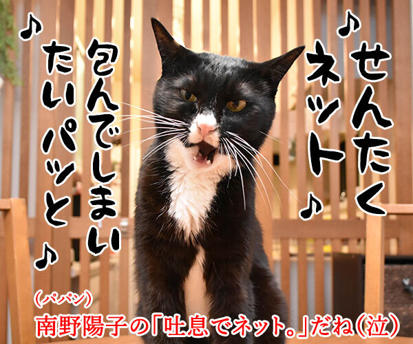 パニック状態のにゃんこにはアレを使うのよッ 猫の写真で4コマ漫画 4コマ目ッ