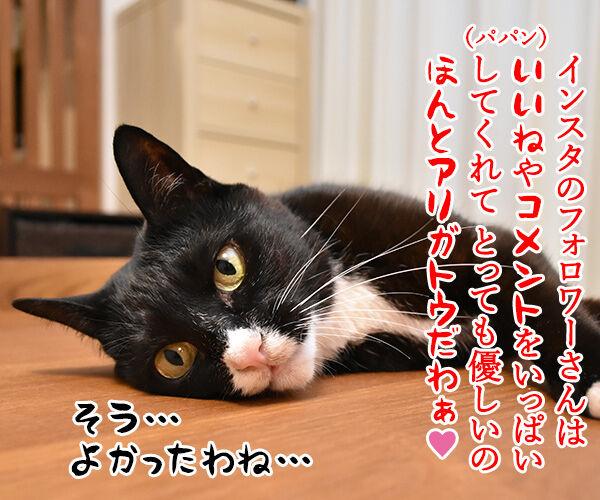 インスタグラムのフォロワーさんが2万人を超えたのよッ 猫の写真で4コマ漫画 2コマ目ッ