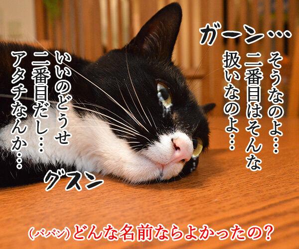 名前の由来 猫の写真で4コマ漫画 3コマ目ッ