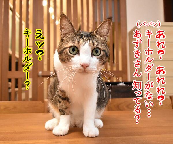だいずさんのキーホルダーができたのよッ 猫の写真で4コマ漫画 3コマ目ッ