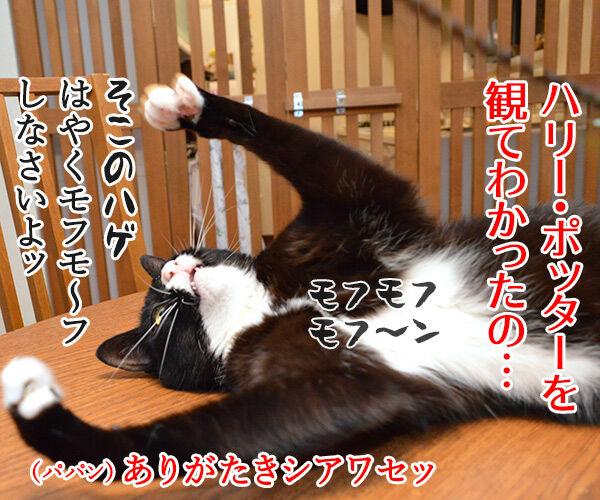 下僕な理由がわかったの 猫の写真で4コマ漫画 3コマ目ッ
