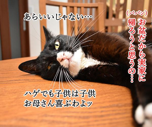 お盆だから実家に帰ろうと思うの 猫の写真で4コマ漫画 1コマ目ッ