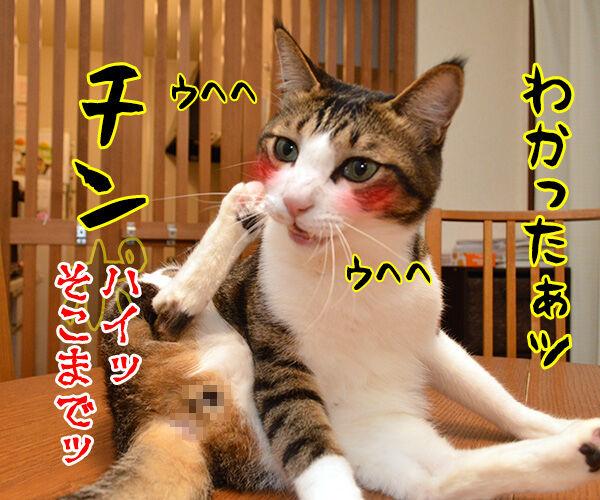 きょうは何の記念日でしょうか? 猫の写真で4コマ漫画 4コマ目ッ