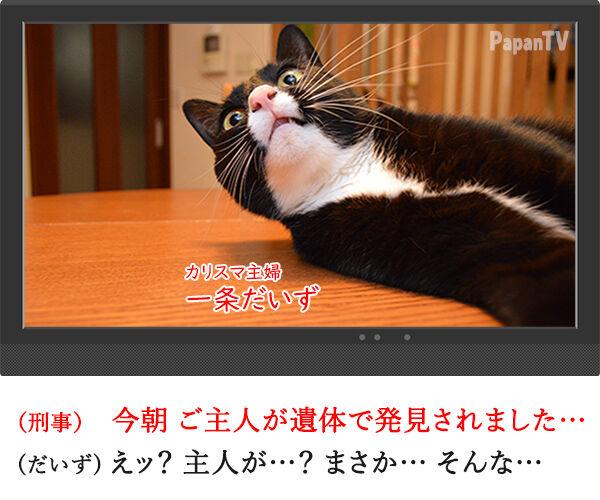 2時間ドラマの再放送 開始15分 猫の写真で4コマ漫画 1コマ目ッ