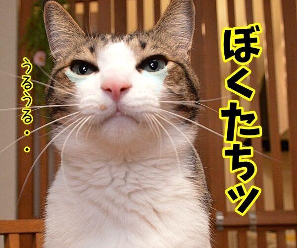 門出の言葉「僕たち、わたしたちは……」 猫の写真で4コマ漫画 2コマ目ッ