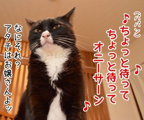 ♪ラッスンゴレライ♪ 猫の写真で4コマ漫画 1コマ目ッ