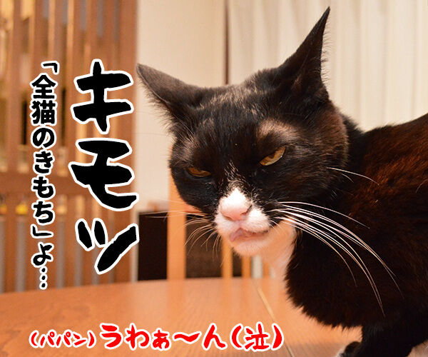 「ねこのきもち」まだぁ? 猫の写真で4コマ漫画 4コマ目ッ