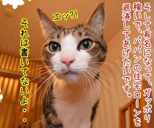 ボクのゆめ 猫の写真で4コマ漫画 3コマ目ッ