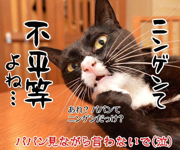 大谷翔平くんて… 猫の写真で4コマ漫画 4コマ目ッ