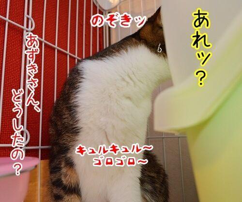 来たなッ 猫の写真で4コマ漫画 3コマ目ッ