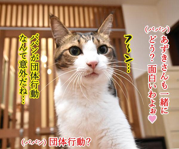 おっさんずラブのDVDをイッキ見しちゃったのよッ 猫の写真で4コマ漫画 3コマ目ッ