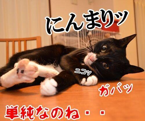 遠野なぎこさん 結婚おめでとう 猫の写真で4コマ漫画 4コマ目ッ