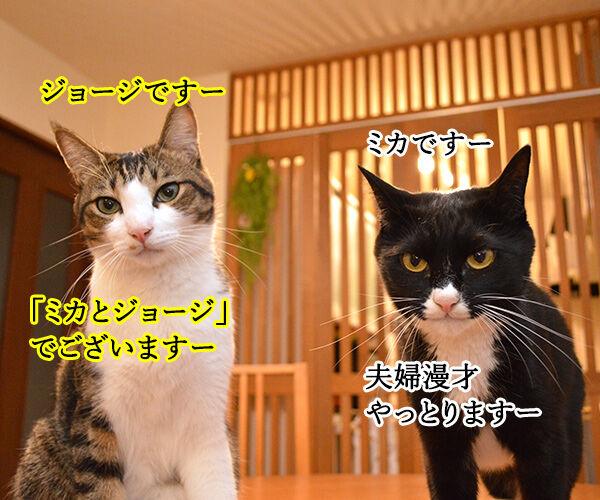 夫婦漫才 ミカとジョージ 猫の写真で4コマ漫画 1コマ目ッ