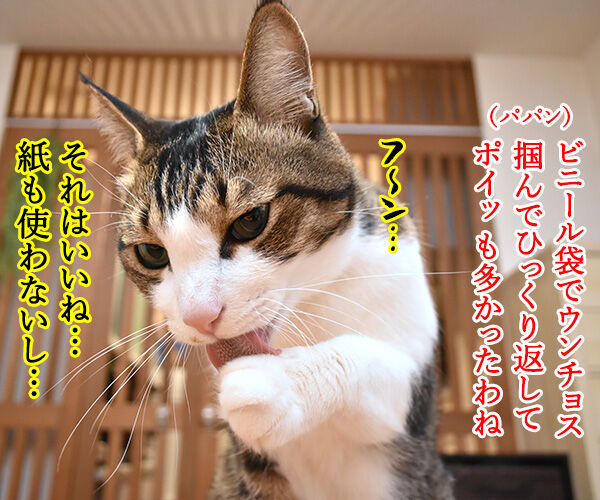 ウンチョスの片づけ方にたくさんコメントいただいたのッ 猫の写真で4コマ漫画 3コマ目ッ