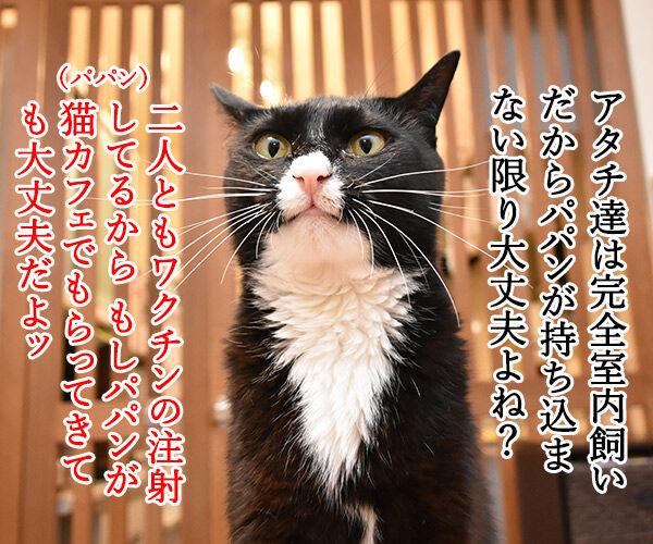 猫カフェでパルボウィルス感染して臨時休業なんですってッ 猫の写真で4コマ漫画 2コマ目ッ