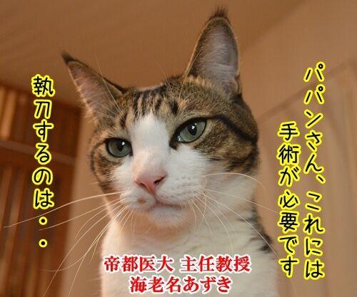ドクターX 其の一 猫の写真で4コマ漫画 1コマ目ッ