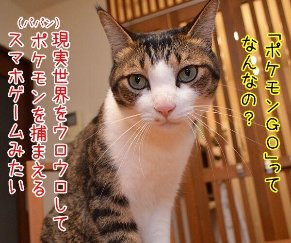「ポケモンGO」でポケモンゲットだぜーッ 猫の写真で4コマ漫画 2コマ目ッ