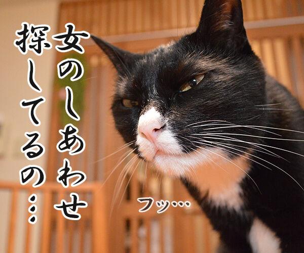 さがしもの 猫の写真で4コマ漫画 4コマ目ッ