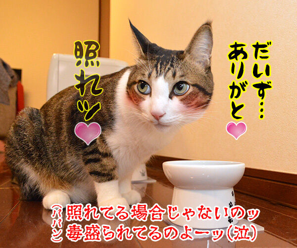 今日はバレンタインデーだから… 猫の写真で4コマ漫画 4コマ目ッ