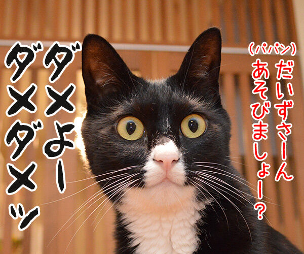 ダメよー ダメダメッ 猫の写真で4コマ漫画 1コマ目ッ