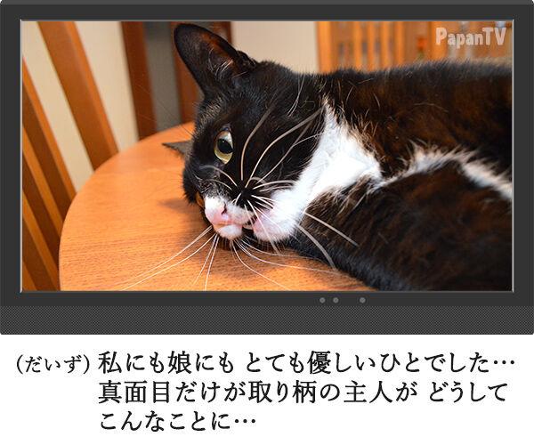 2時間ドラマの再放送 開始15分 猫の写真で4コマ漫画 3コマ目ッ