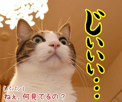 なに見てるの? 猫の写真で4コマ漫画 1コマ目ッ