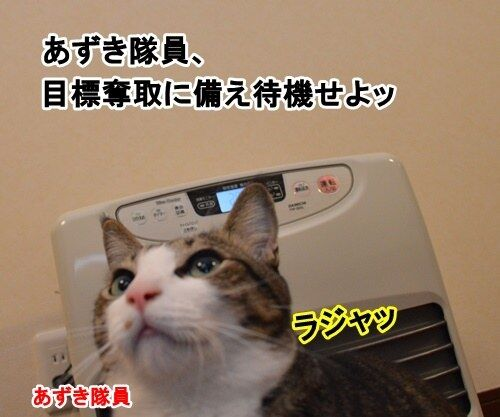 アタック 猫の写真で4コマ漫画 1コマ目ッ