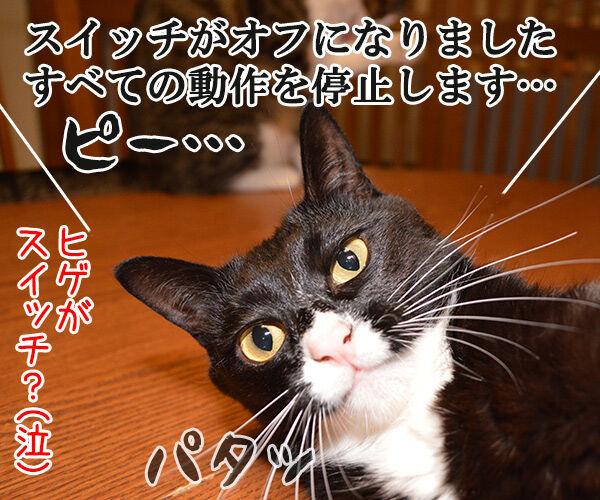 だいずの秘密 猫の写真で4コマ漫画 4コマ目ッ
